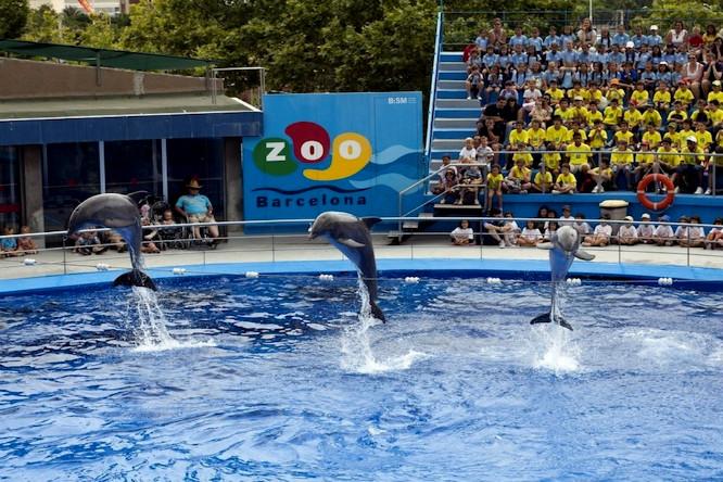 El Zoo de Barcelona podría cerrar de forma definitiva