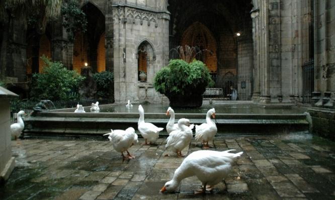 ocas de la Catedral de la Santa Creu i Santa Eulàlia