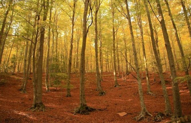 bosque-santa-fe-del-montseny