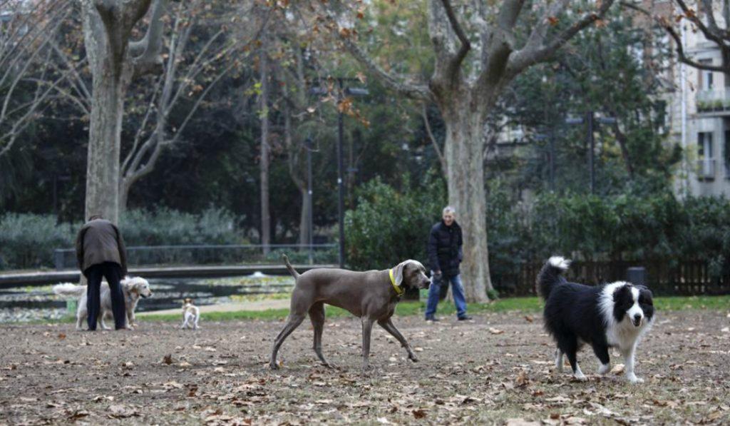 Barcelona tendrá en primavera 10 zonas de recreos para perros