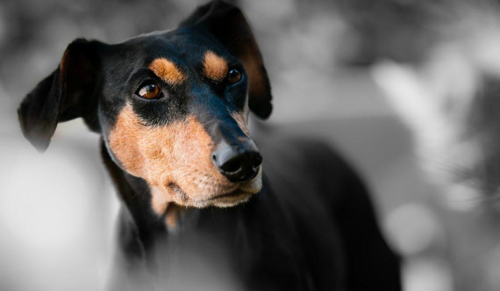El MEAM abrirá sus puertas a los perros este finde
