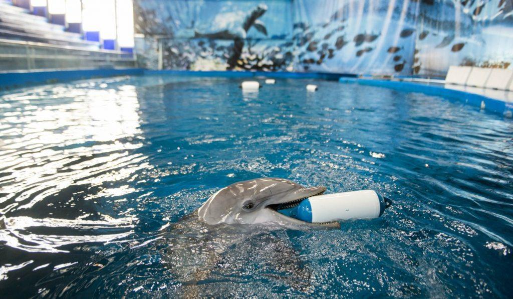 No habrá más cetáceos en cautividad en Barcelona