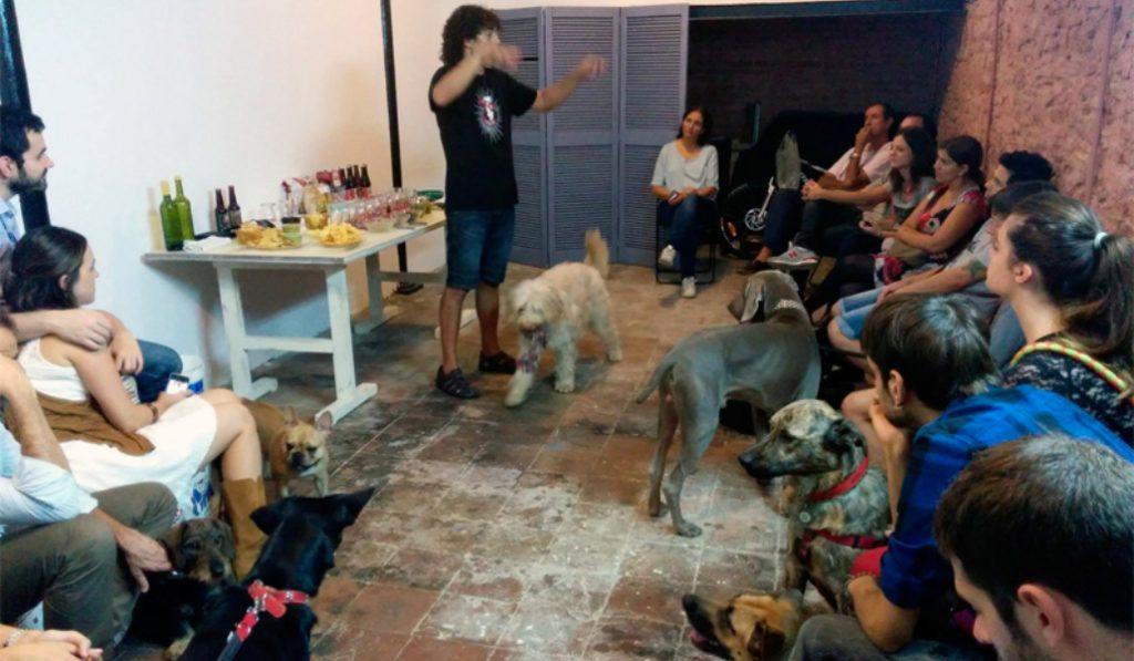 Barkcelona, un club social para perros en tu ciudad