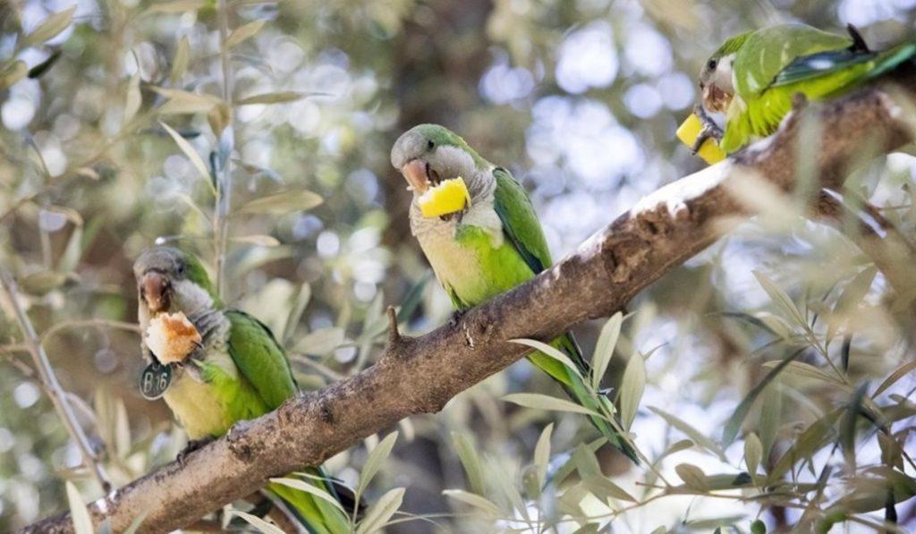 ¿Quiénes son esos pájaros exóticos que vuelan por Barcelona?