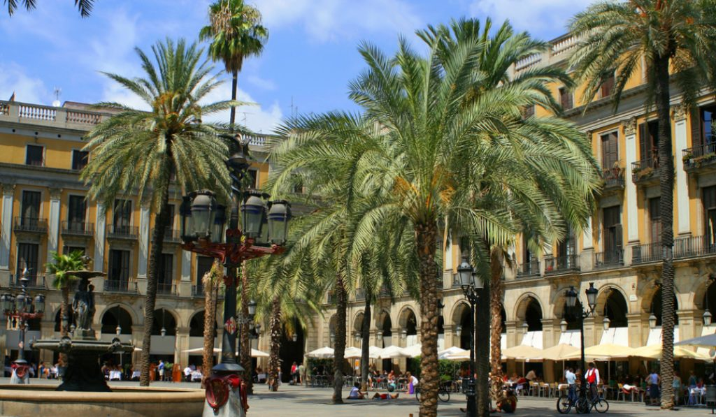 Este fin de semana ha muerto la palmera más alta de Barcelona