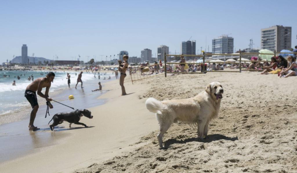 5 razones por las que Barcelona es la mejor ciudad del mundo para tener un perro