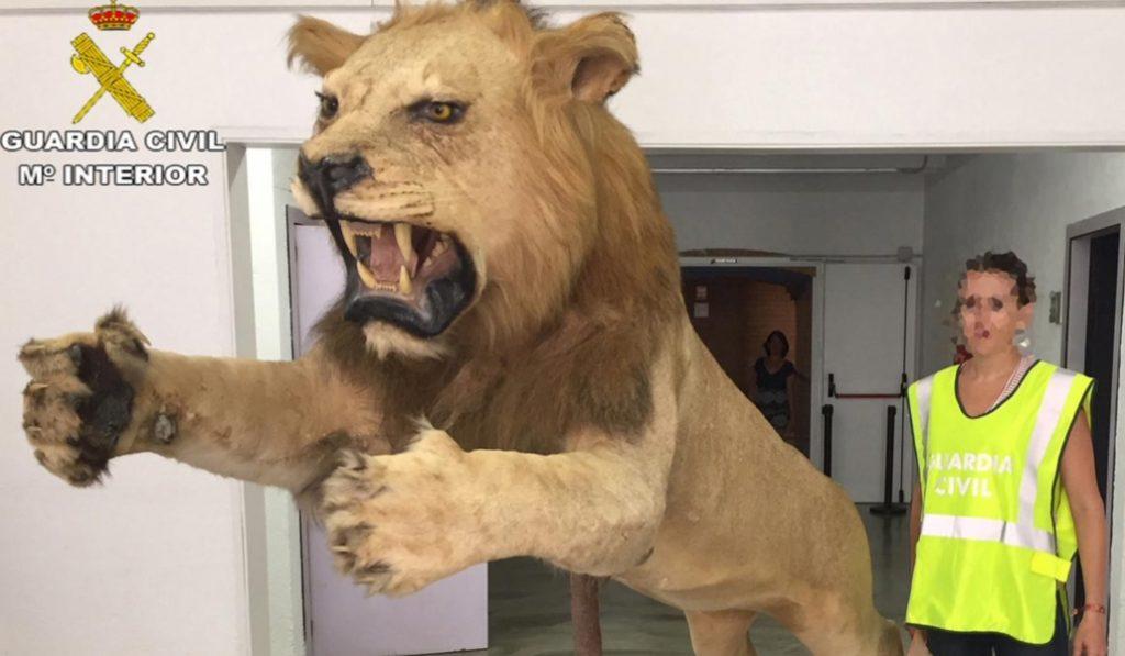 Intenta vender un león africano disecado a través de una página de compraventa