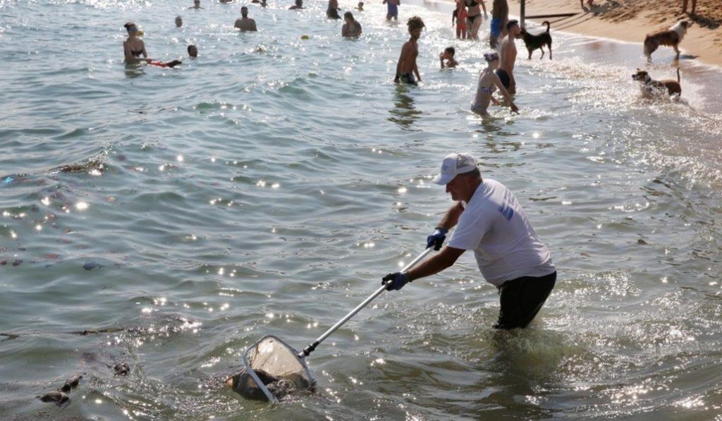 ¿Por qué ayer había ratas flotando en las playas de Barcelona?