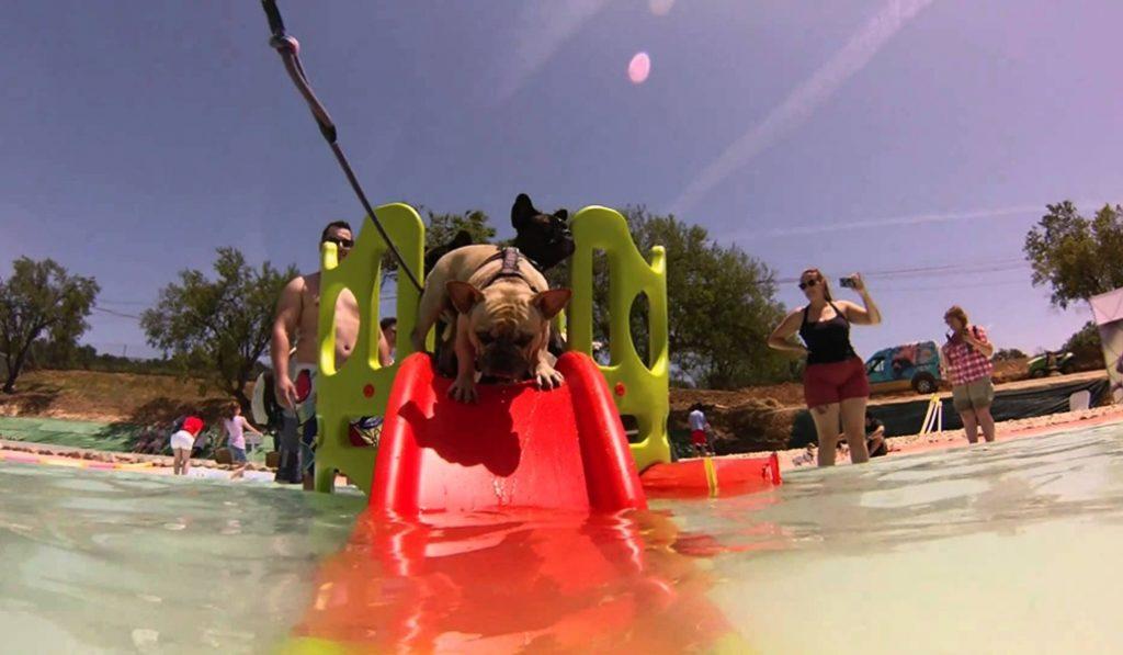 Un parque acuático para perros a 30 km de Barcelona