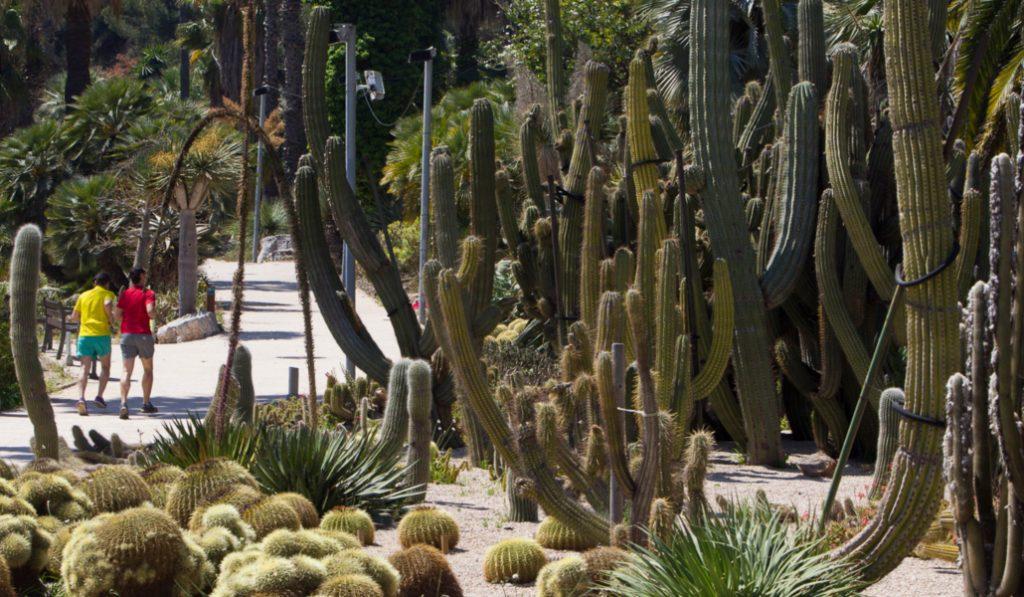Jardines de Mossèn Costa i Llobera, un pedazo del desierto mexicano en Montjuïc