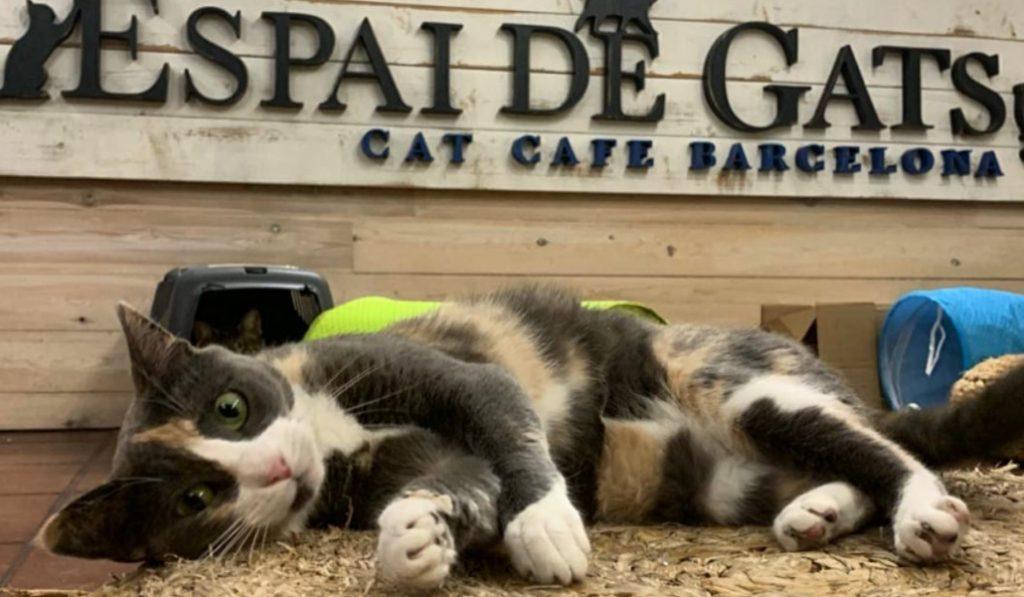 Espai de gats, una cafetería única