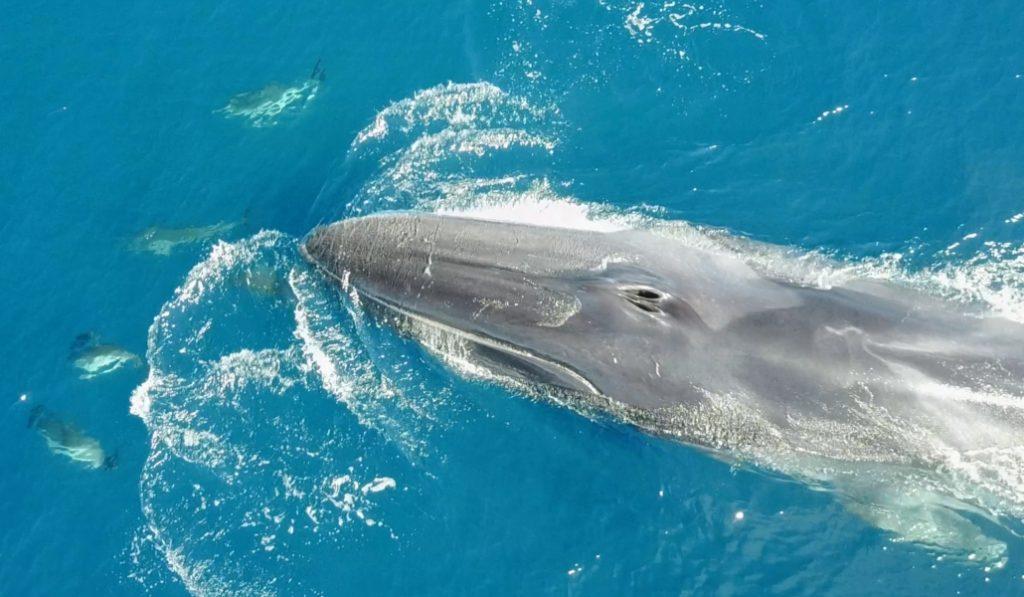 Avistan ballenas, delfines y cachalotes en la costa de Barcelona