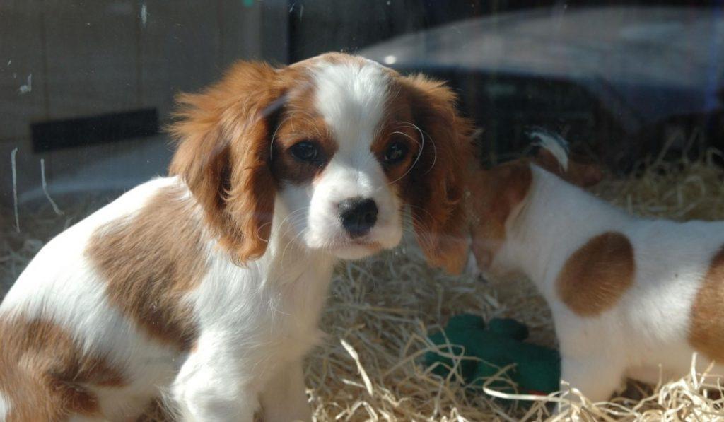 Barcelona prohíbe los anuncios de venta de animales en Milanuncios y en Vibbo