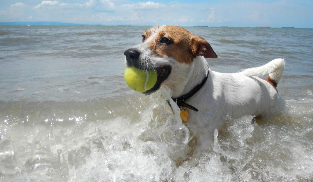 La playa para perros volverá a abrir este verano