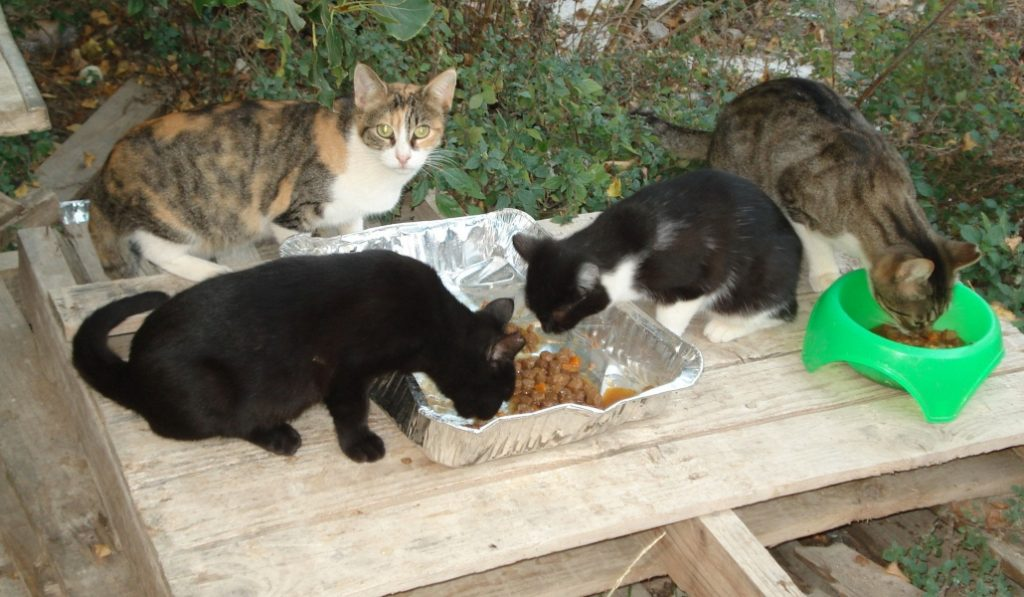 DeGats, la asociación que defiende a los gatos y gestiona sus colonias