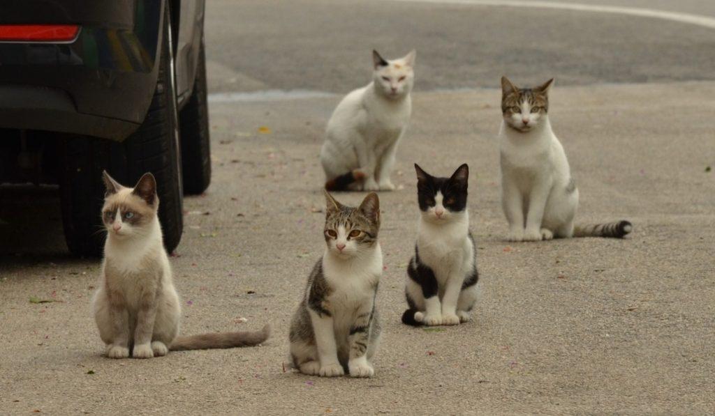 Casi diez mil gatos salvajes viven en las calles de Barcelona