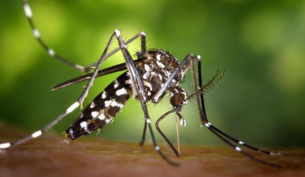 El mosquito tigre, la plaga más preocupante de este verano