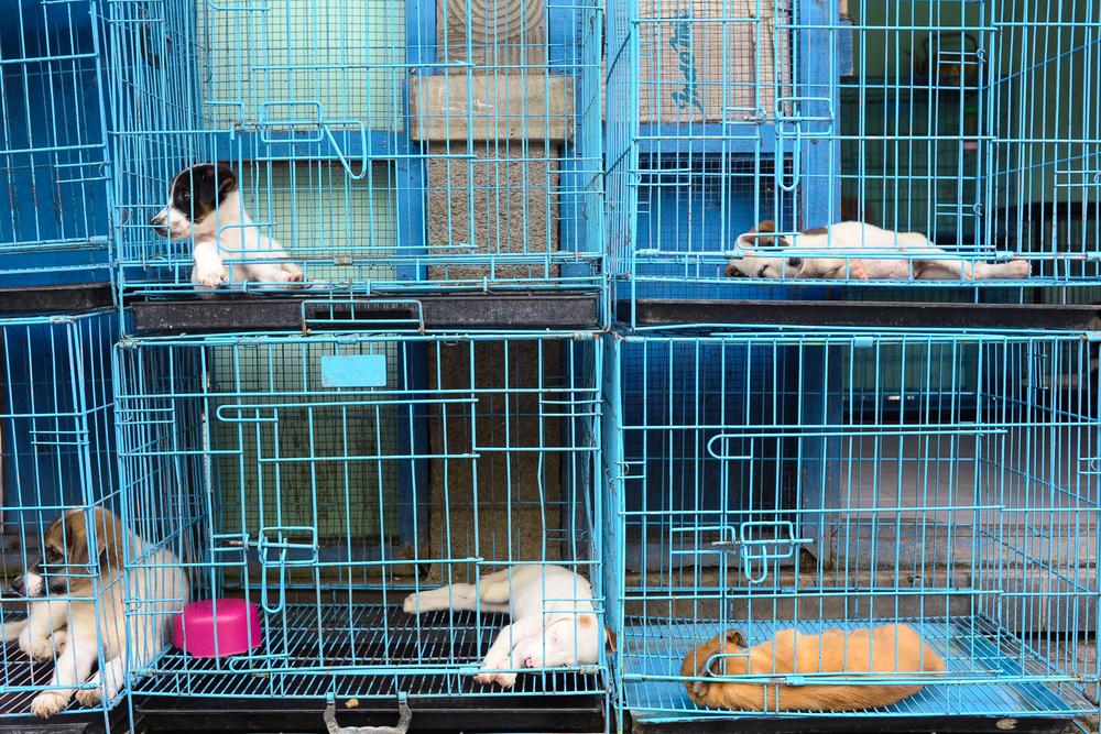 El Ayuntamiento lleva ante el juez a los propietarios de una tienda de animales