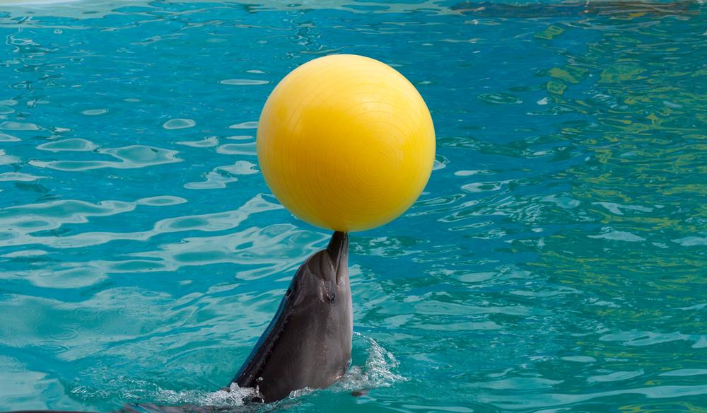 Muere Anak, el delfín más viejo del Zoo de Barcelona