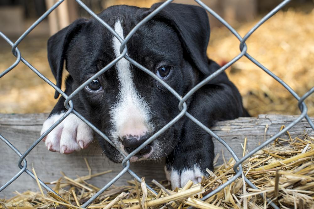 El Ayuntamiento lanza una campaña navideña en favor de la adopción de animales