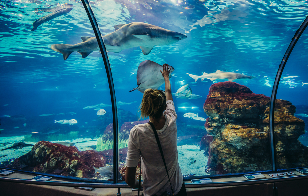 Entradas gratis para el Aquàrium de Barcelona (con una condición)