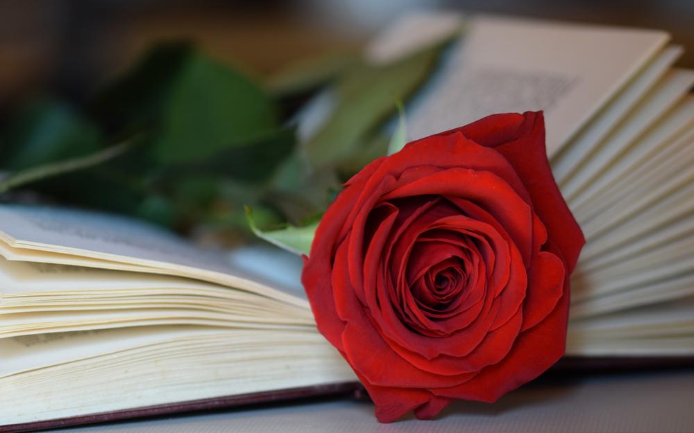 El Hospital Clínic reparte 5.000 rosas y 800 libros entre pacientes y sanitarios