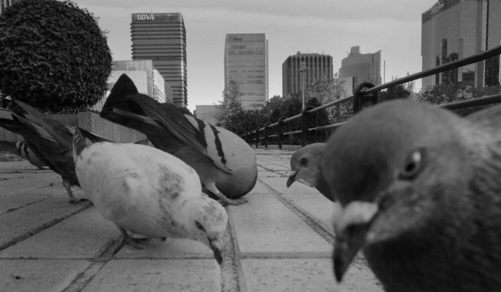El fotógrafo que retrata cómo las palomas se adueñan de la ciudad