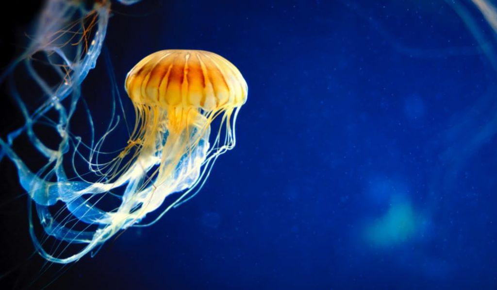 Esta 'app' te dice si hay medusas en la playa