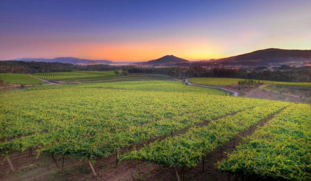 El arte y el vino de La Rioja Alta S.A. se dan la mano en esta cata online
