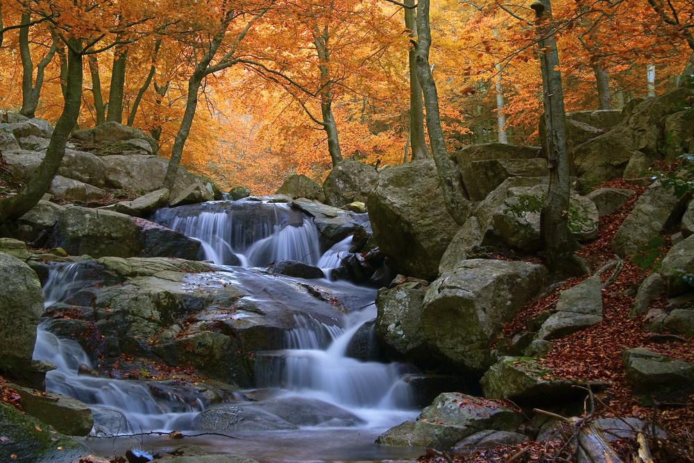 Montseny, una joya de la naturaleza a solo 50 km de Barcelona