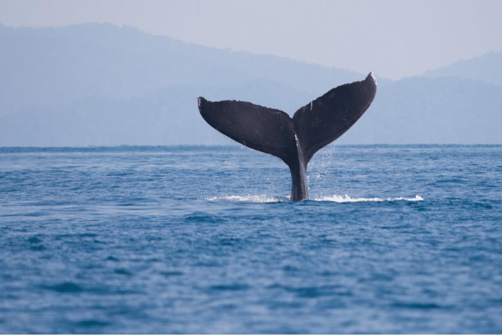 Las ballenas vuelven a las costas catalanas