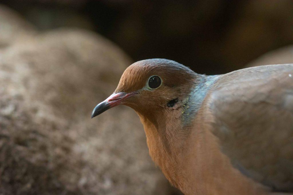 Nacen en el Zoo de Barcelona dos crías de una especie extinta en su medio natural