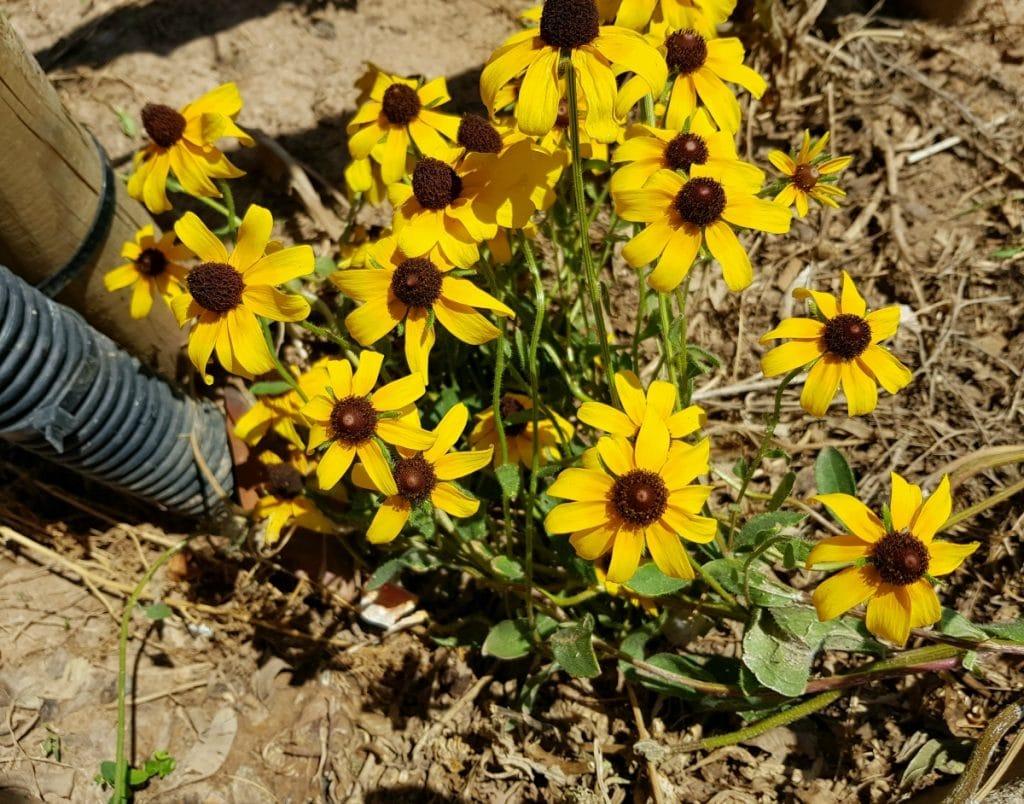 Eskocells, el proyecto que llena los maceteros urbanos de plantas y flores