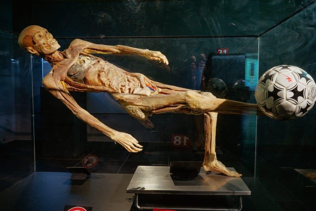 Human Bodies: la exposición que mejor te acerca al cuerpo humano