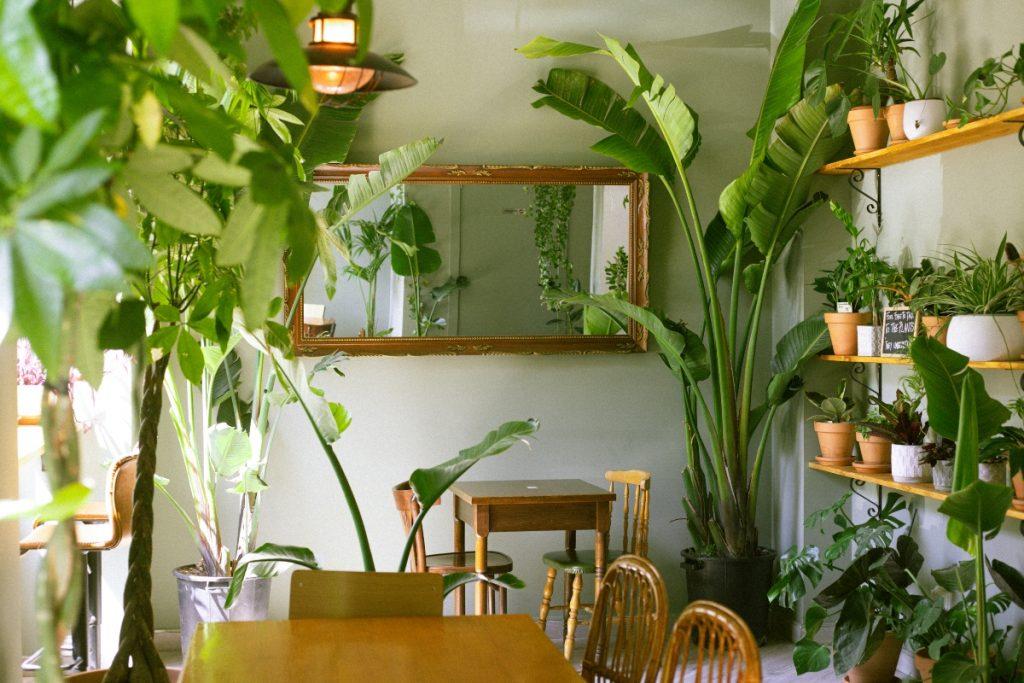 La suegra del jardinero, el primer bar botánico de la ciudad