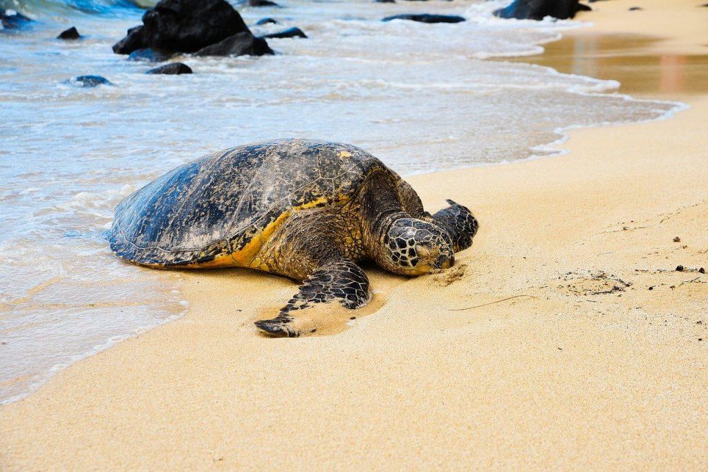 Se han liberado 24 tortugas marinas que nacieron en la playa de la Mar Bella