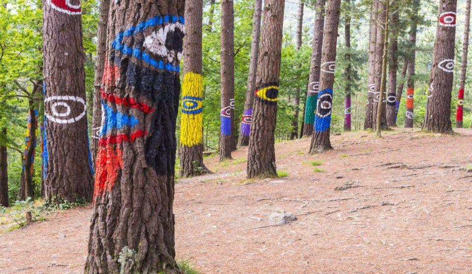 Oma: un bosque lleno de magia