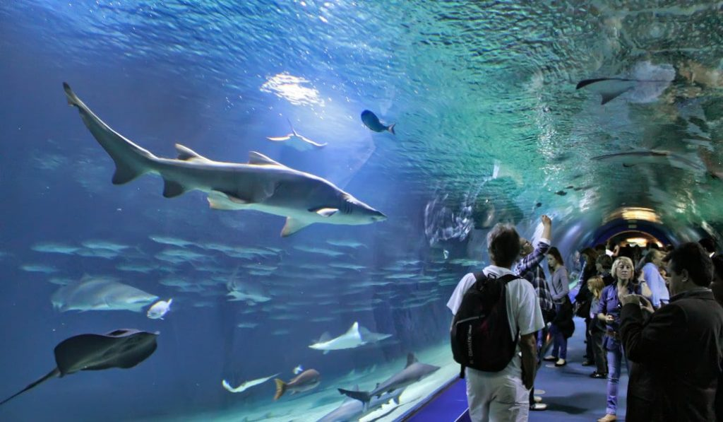 Descubre gratis la fauna acuática del Oceanogràfic con una visita desde casa