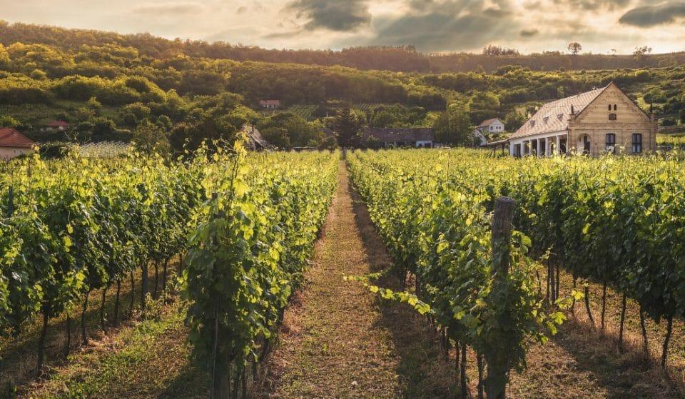 Descubre con Winers cómo disfrutar al máximo el mejor vino