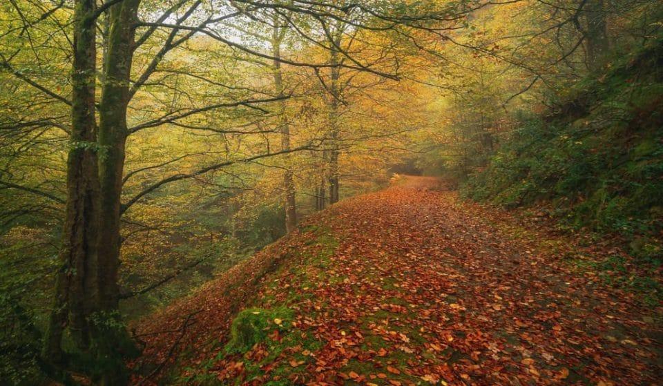 El bosque de Balgerri, el hayedo más extenso de Bizkaia