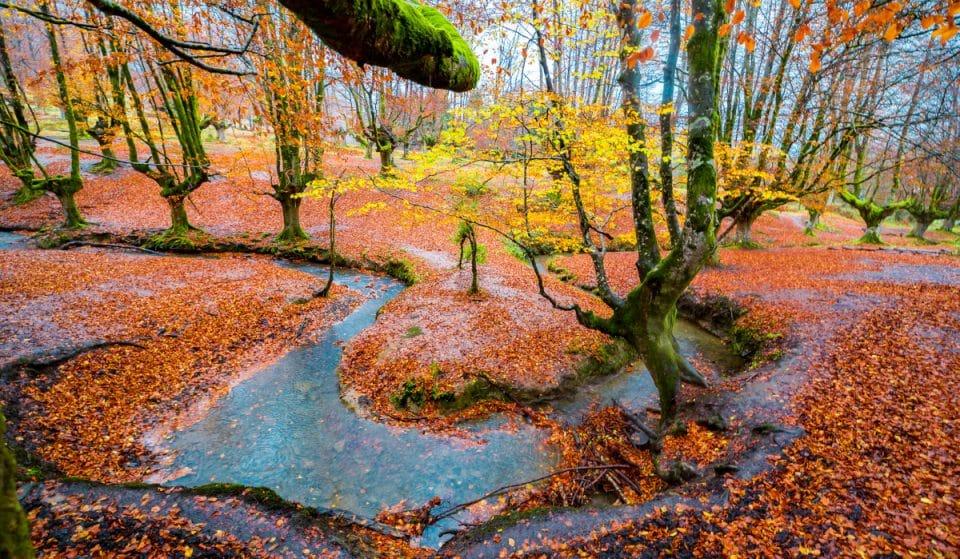 Hayedo de Otzarreta, el bosque mágico de Bizkaia