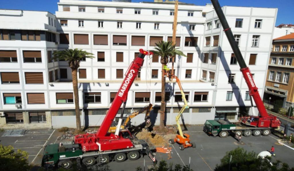 Retiran las palmeras centenarias de la Escuela Universitaria de Magisterio