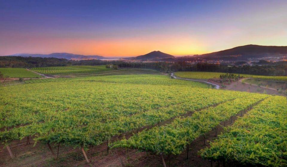 El mejor vino de La Rioja Alta llega a tu casa con esta cata personalizada