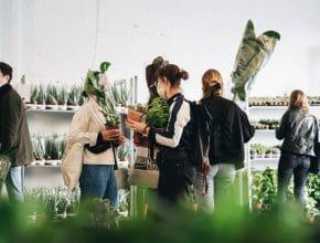 Maison Bouture: el mercadillo de plantas itinerante vuelve este fin de semana a Bilbao