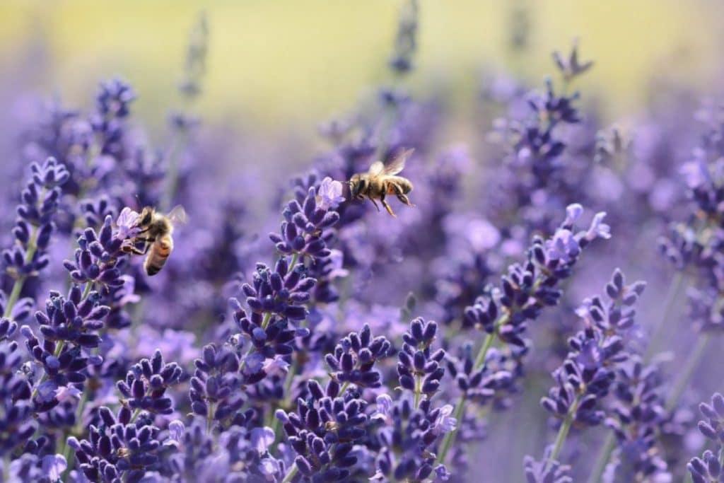 Esto es lo que puedes hacer para que tu balcón sea apto para abejas