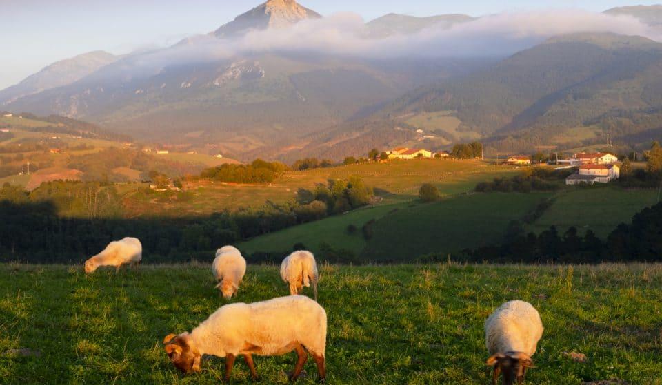 El origen vasco de «García», el apellido más común de España viene del euskera