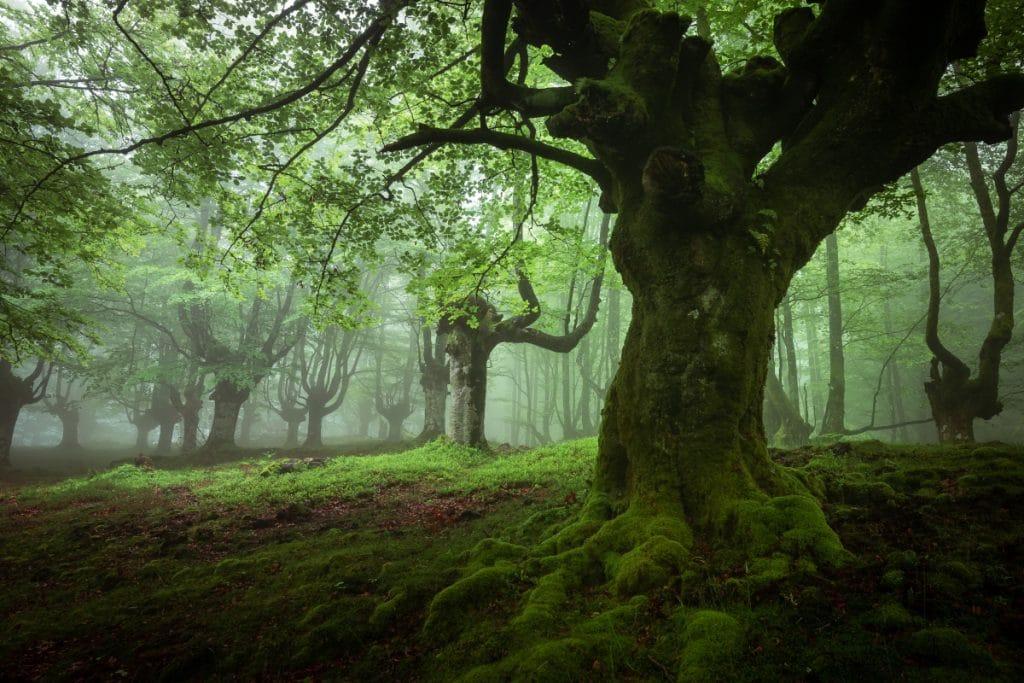 Hayedo de Belaustegi: un paraje mágico en pleno Parque Natural del Gorbeia