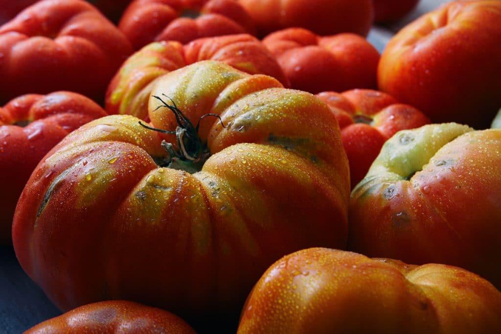 El mejor tomate de España se cultiva en Euskadi