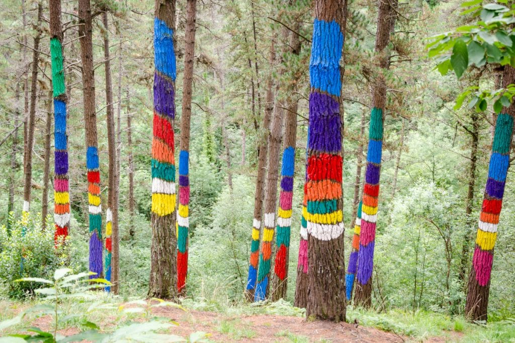 El Bosque de Oma volverá a tomar vida en un pinar contiguo