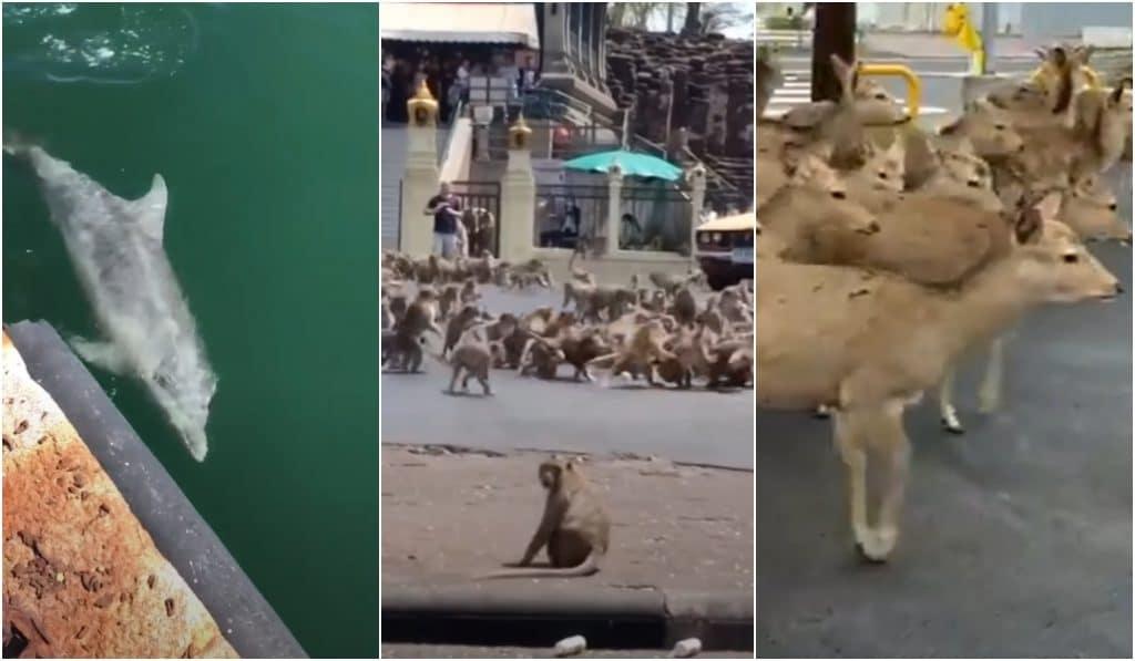 Coronavirus : 10 animaux insolites aperçus en ville à travers le monde